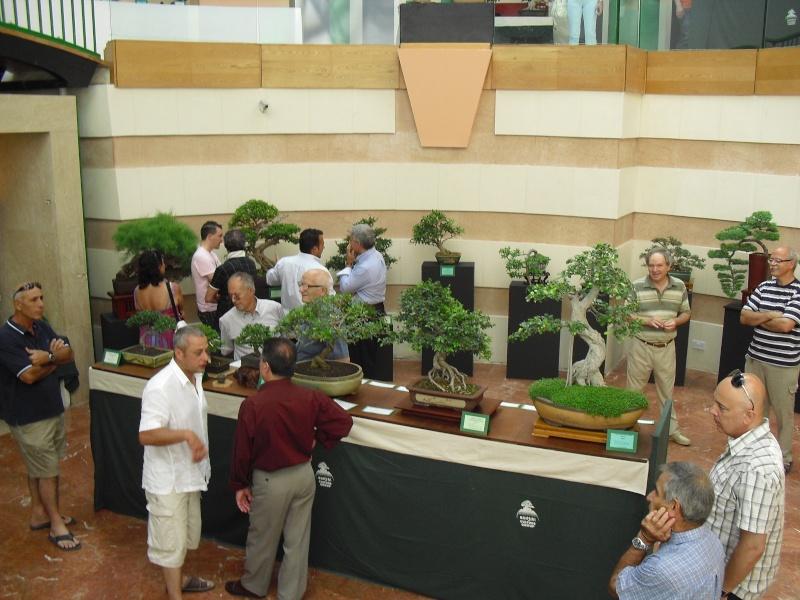 Bonsai Culture Group-Malta Annual Exhibition Cimg5311