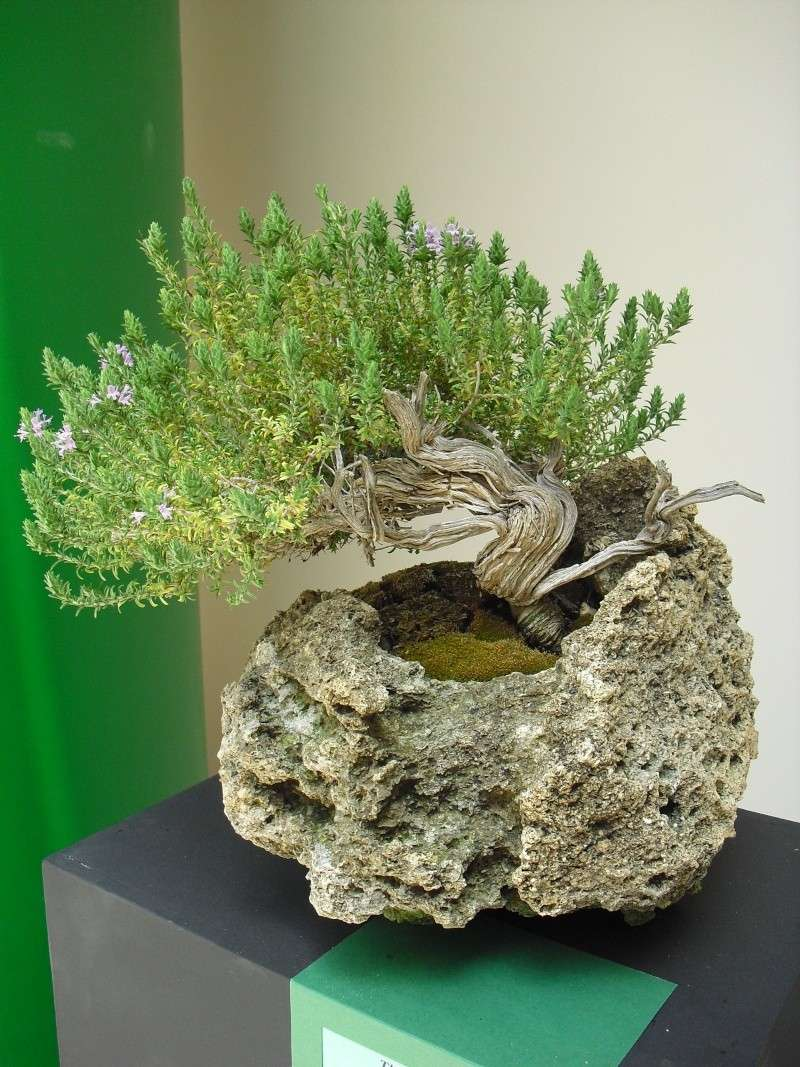 Bonsai Culture Group-Malta Annual Exhibition Cimg5315