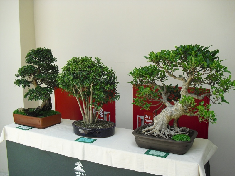 Bonsai Culture Group-Malta Annual Exhibition - Page 2 Cimg5316