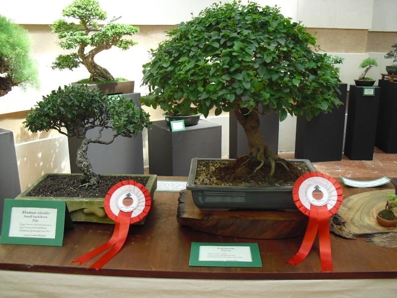 Bonsai Culture Group-Malta Annual Exhibition Cimg5414