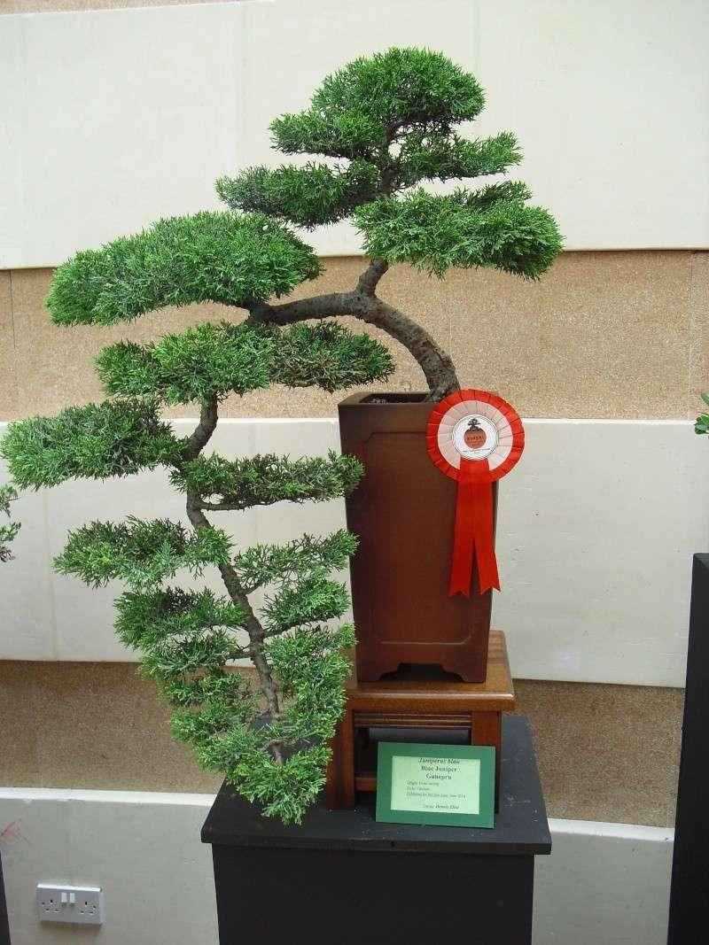 Bonsai Culture Group-Malta Annual Exhibition Cimg5415