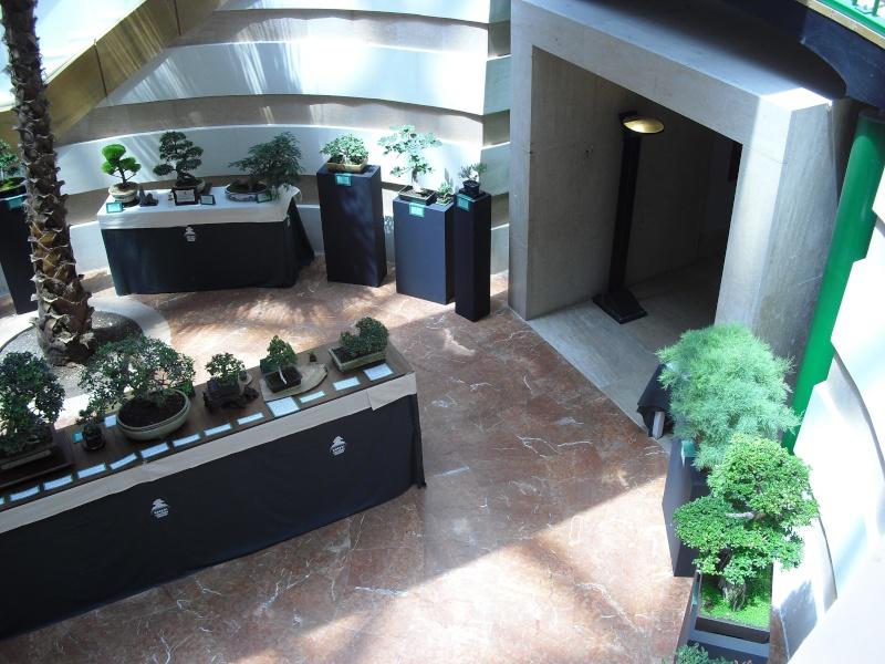 Bonsai Culture Group-Malta Annual Exhibition Cimg5416