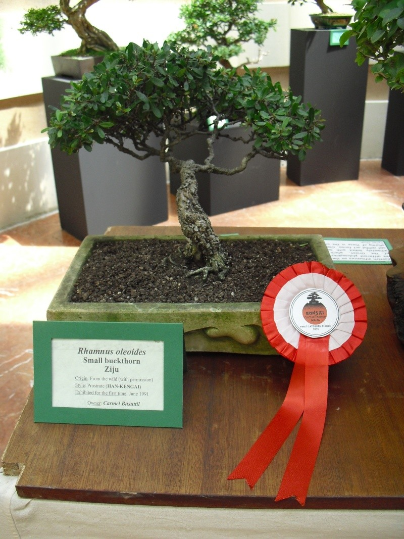 Bonsai Culture Group-Malta Annual Exhibition - Page 2 Cimg5418