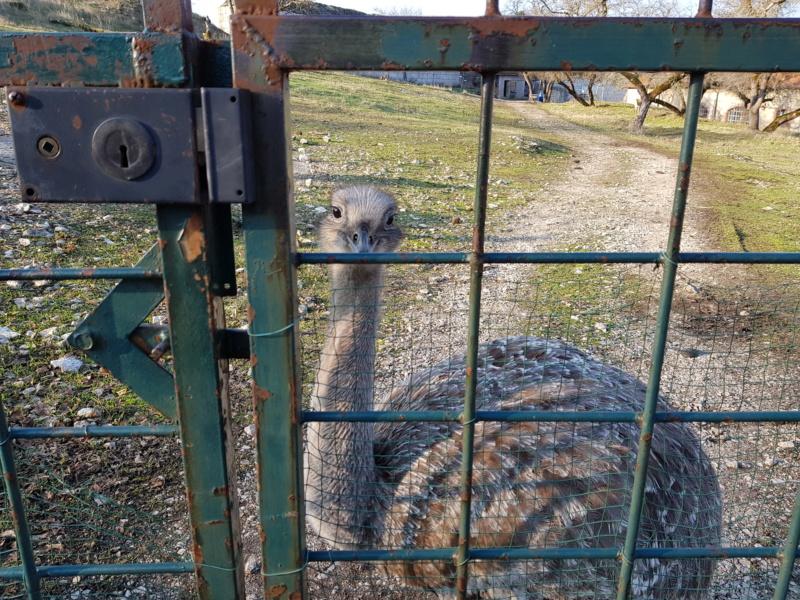 Au pays boisé des bisontins futés - Page 2 20181224