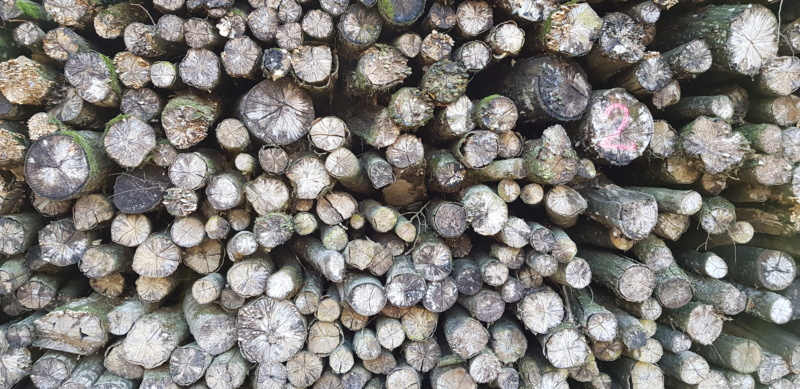 Au pays boisé des bisontins futés - Page 2 20190327
