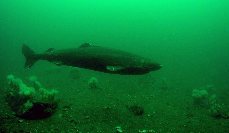 Étonnements & p'tites merveilles Requin11