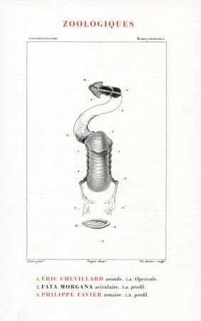 Éric Chevillard - Page 5 Zoolog10