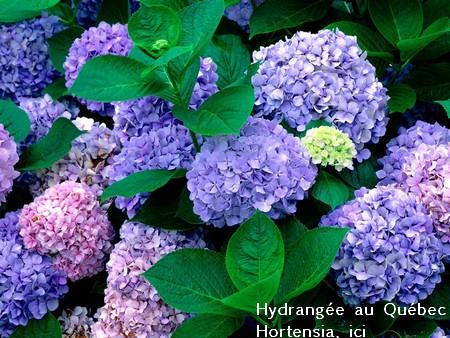 Mes Arbres et Arbustes et fleurs 12130910