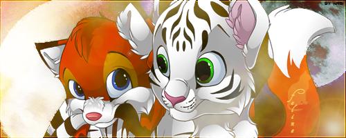La Galerie d'une petite louve Tigre_10