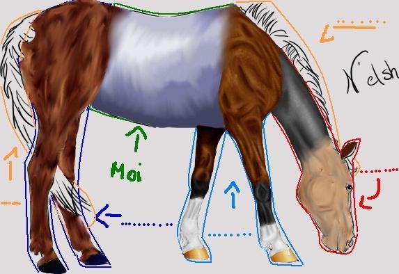 colo à plusieurs cheval de sport - Page 2 Cheval13
