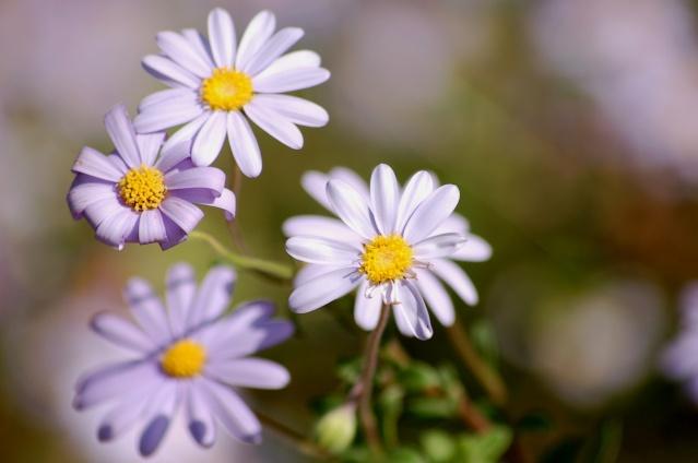 vendredi 29 avril Fleurs11