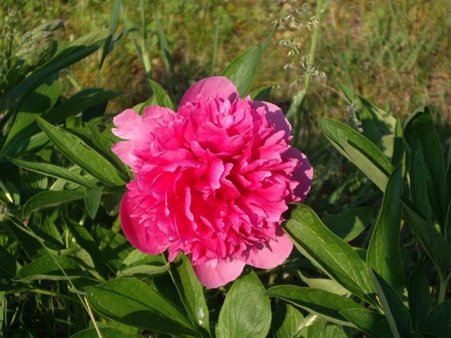 Offrons-nous une fleur ... Imgp2910