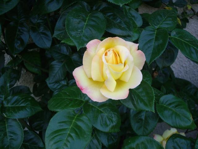 Offrons-nous une fleur ... Imgp2913