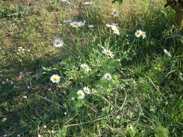 Offrons-nous une fleur ... Imgp2915