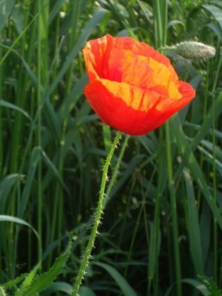 Offrons-nous une fleur ... Imgp3012