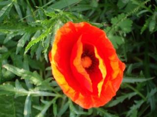 Offrons-nous une fleur ... Imgp3013