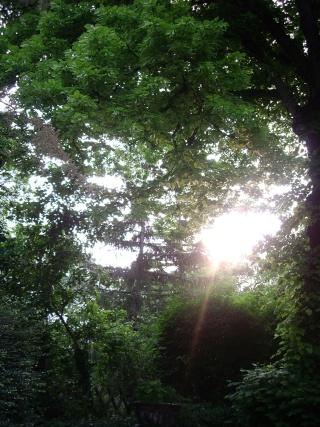 Photo Nature  Imgp3014