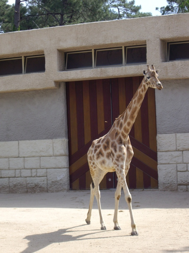 Bienvenue à nos copains les animaux. Imgp3021