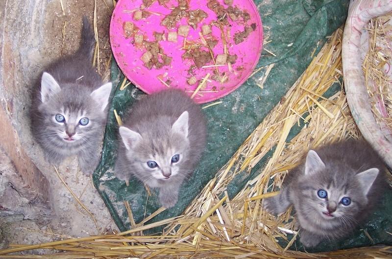 encore trois superbes femelles !!! 4_chat10