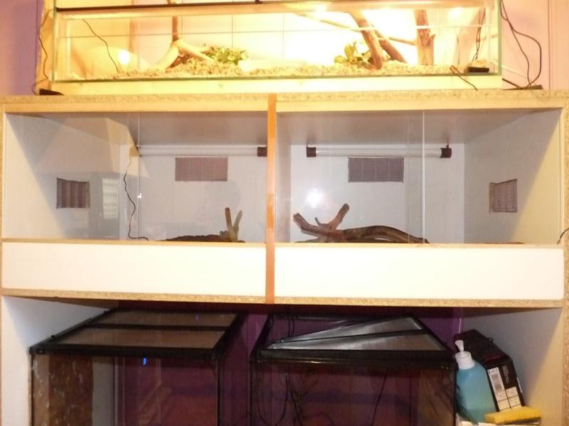 ma première installations  fait par mes soins pour pithuophis et heterodons P1020914