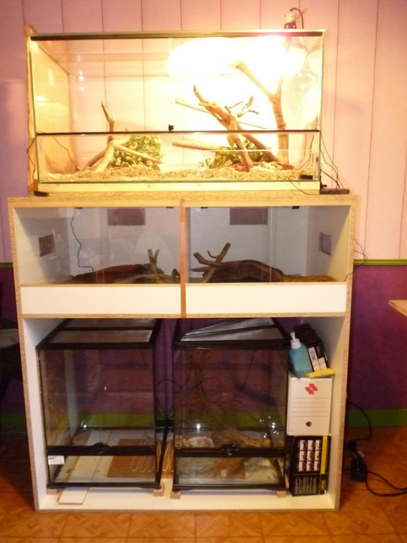 ma première installations  fait par mes soins pour pithuophis et heterodons P1020915