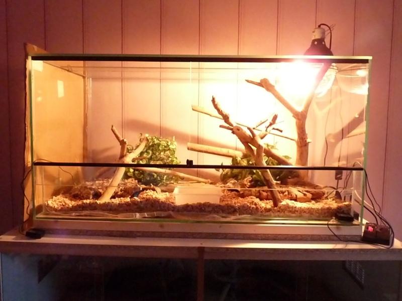 ma première installations  fait par mes soins pour pithuophis et heterodons P1020917