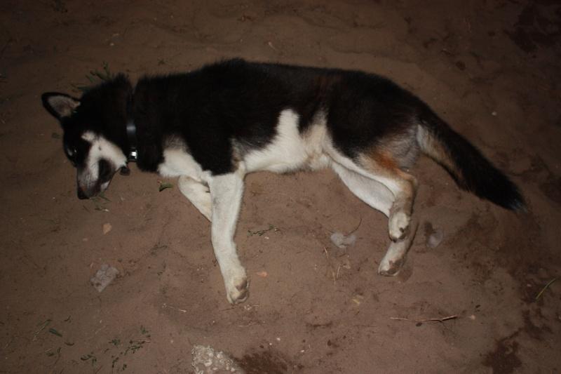 Washo (de son adoption à aujourd'hui) - Page 2 20100911