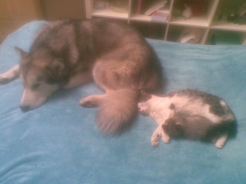 Quelques photos de mon petit loup Eoss  DECEDE 19092010