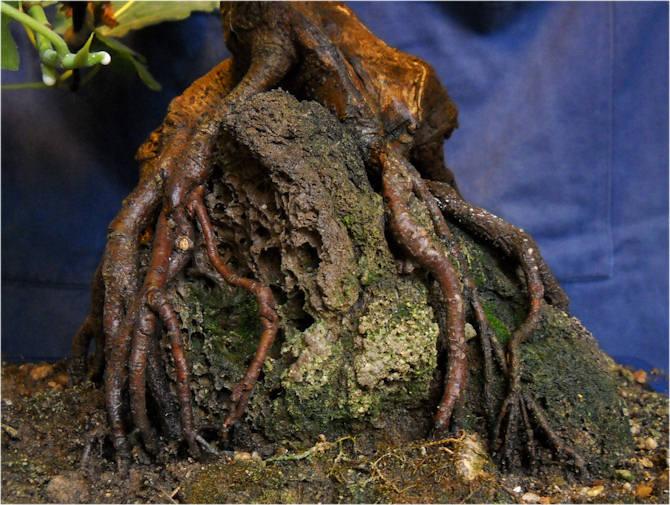Da Macro a Micro - Ficus carica a go-go 04-110