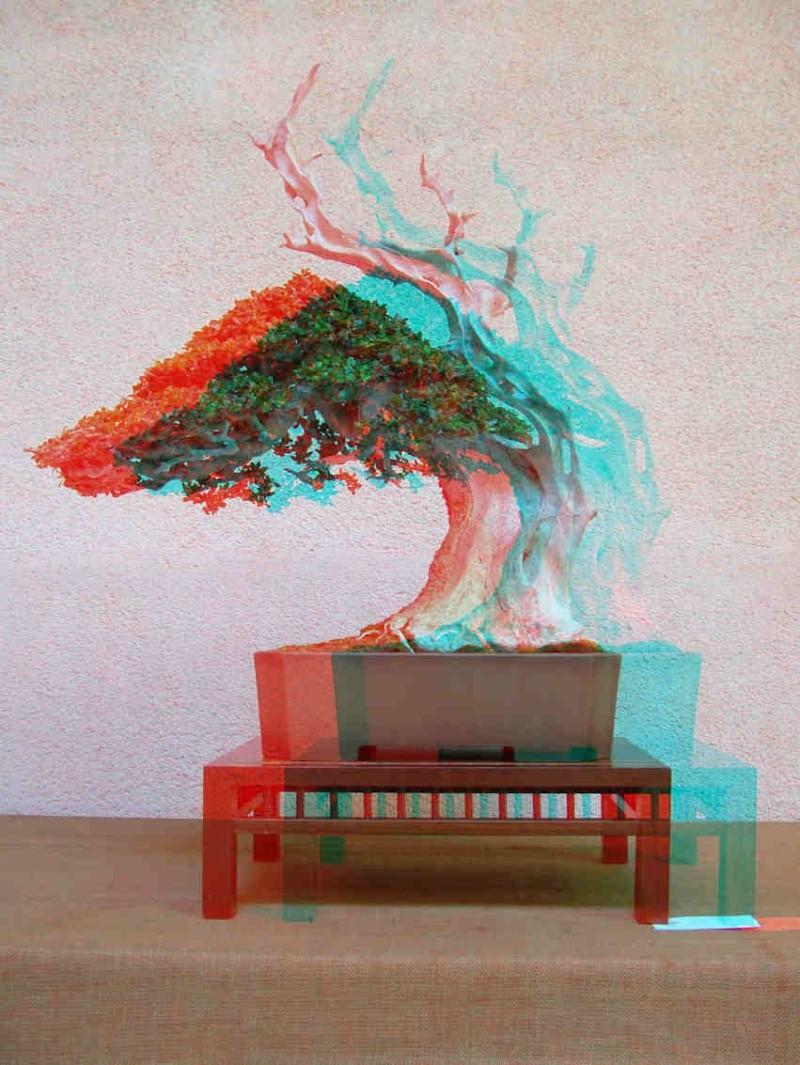 Mostra bonsai Club Palermo 3d310