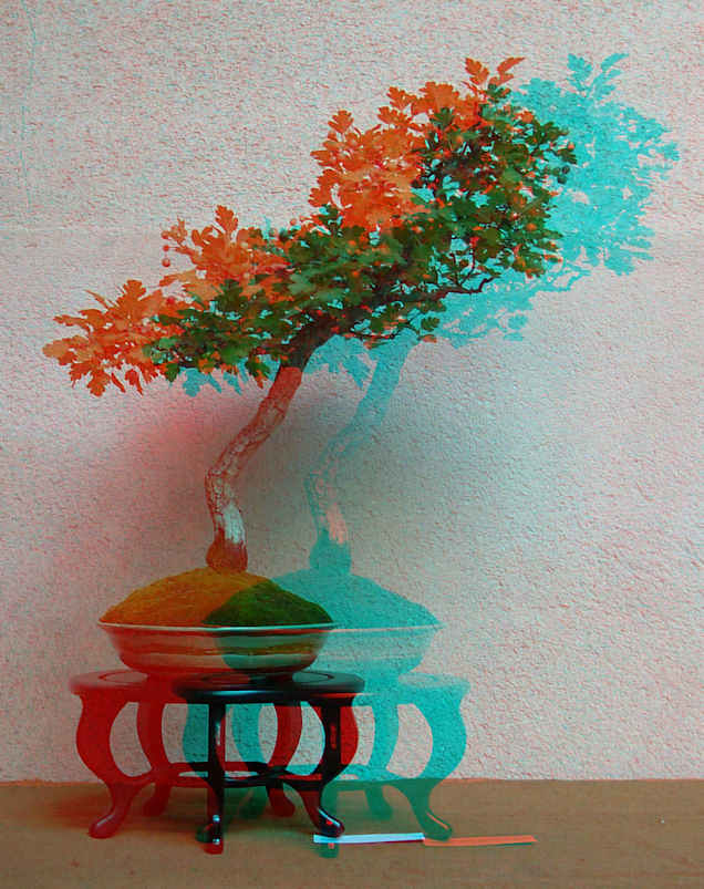 Mostra bonsai Club Palermo 3d410