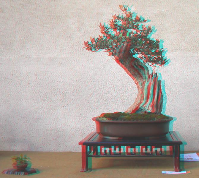 Mostra bonsai Club Palermo Immagi13