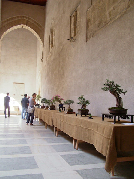 Mostra bonsai Club Palermo Immagi20