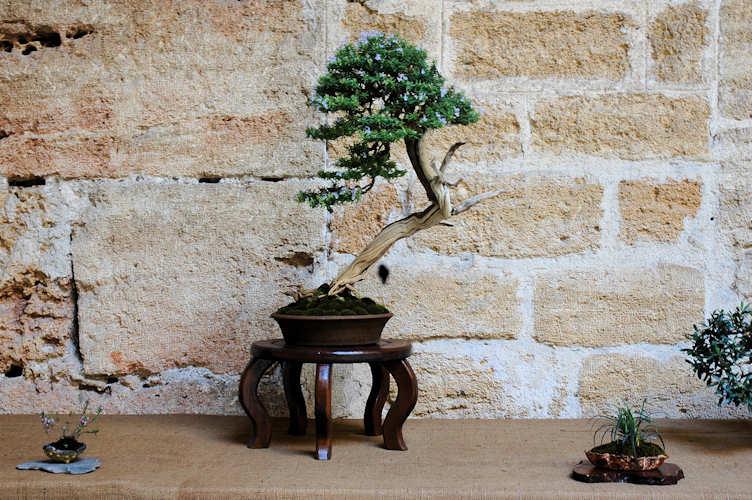 Mostra bonsai Club Palermo Immagi24