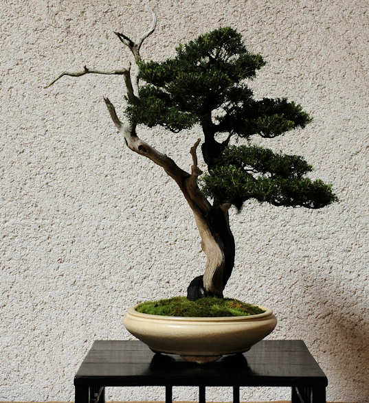 Mostra bonsai Club Palermo Immagi25