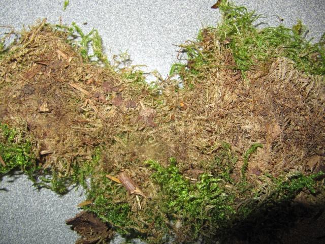 Mousse naturelle (préparation en images) Img_2012