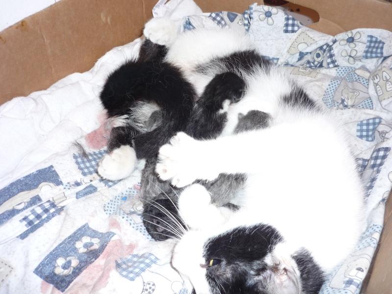 Nimzy et ses bébés P1020729