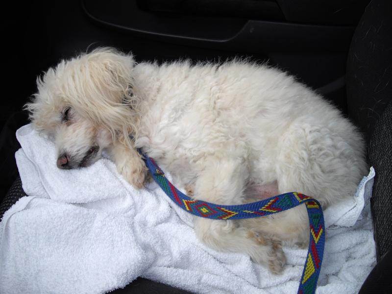 Visite vétérinaire (16 août 2010) Covoit10