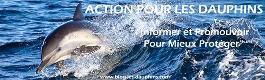 Manisfestation 30 Septembre pour la cause des dauhins Action10