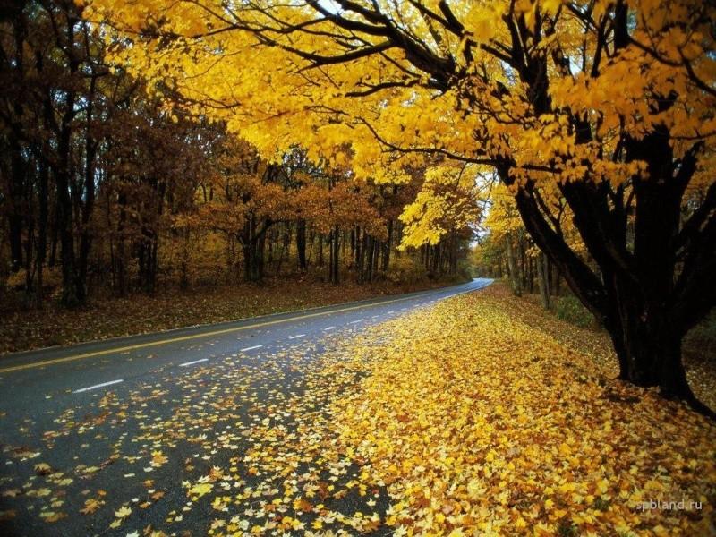 Осень.....Унылая пора....... 15191910