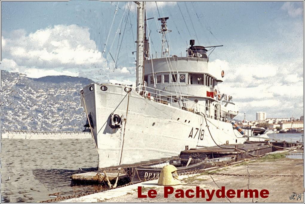 PACHYDERME (RHM) Copie_10