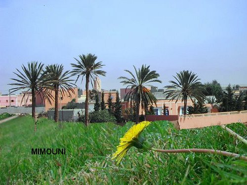 Le Souss aujourd'hui Elkhar10
