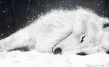 Silver Moonlight prêt à se venger..... Loup-b11