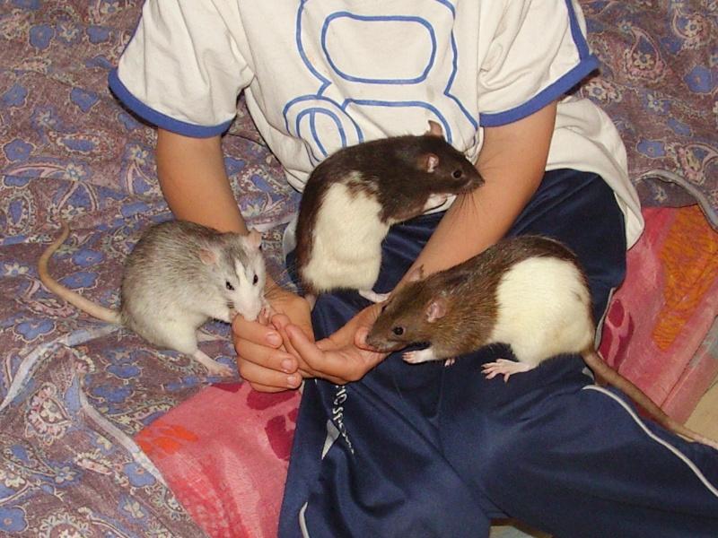 Léna, Jeanne, Zoé et Justine Snb15918