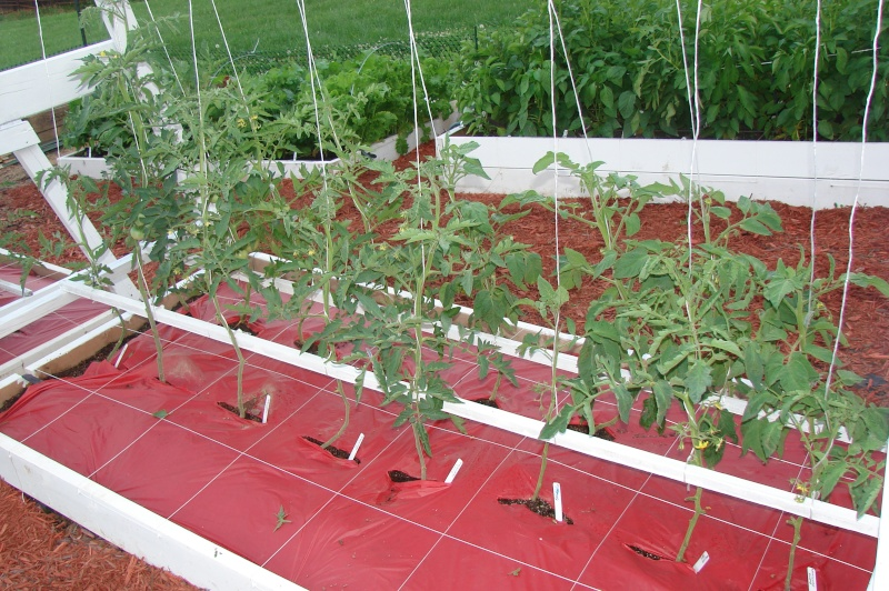 Tomato Tuesday/Upper South region Dsc03710