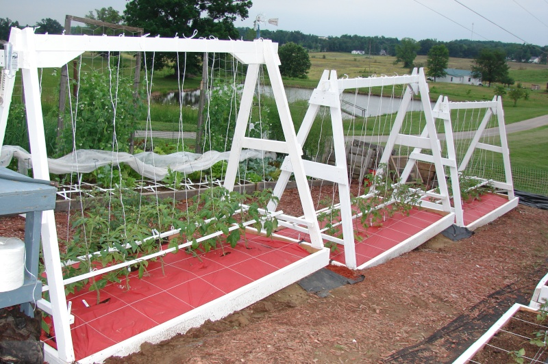 New beds and new trellis pictures from Knob Hill Tomato11