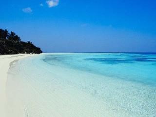 Paradise Island Image-10