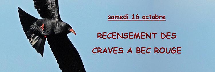 Suivi 2010 du Crave à bec rouge (Pyrrhocorax pyrrhocorax) en Bretagne : Recensement Crave à bec rouge Samedi12