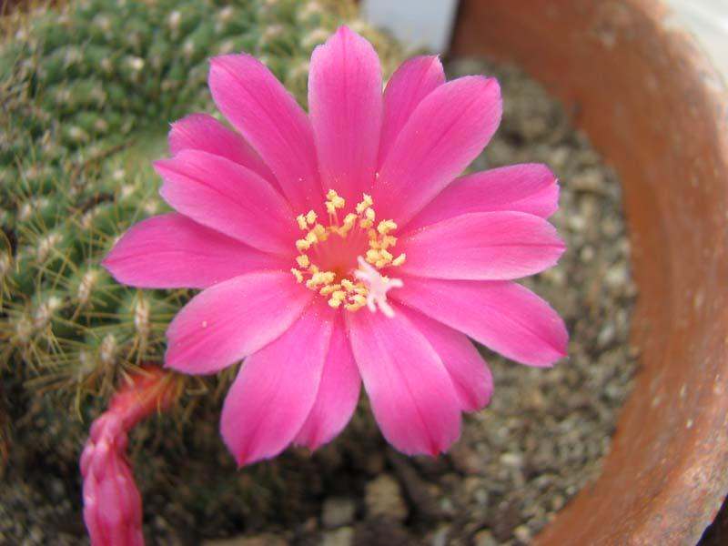 Quelque fleur du mois de mai Rebuti11