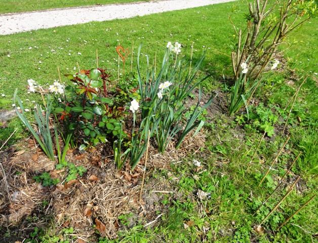 Des floraisons précoces cette années... 2011_037